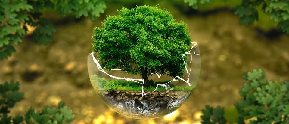Προστασία του περιβάλλοντος με βιολογικό καθαρισμό χαλιού